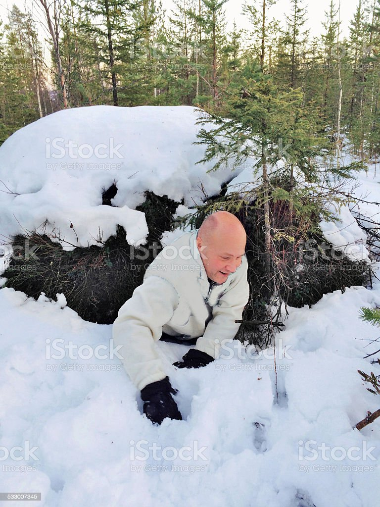 Bear nest stock photo
