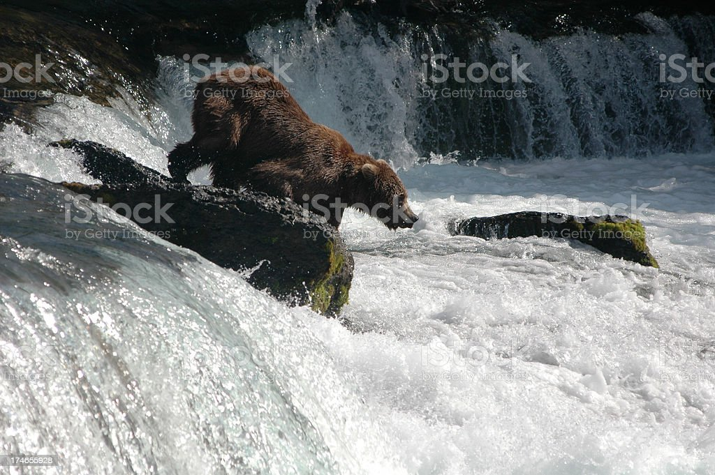 Bear on a Mission stock photo