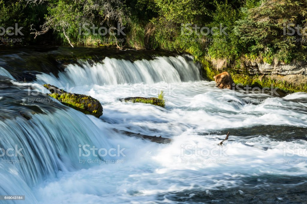 Bear sitting in river below falls waiting for fish stock photo