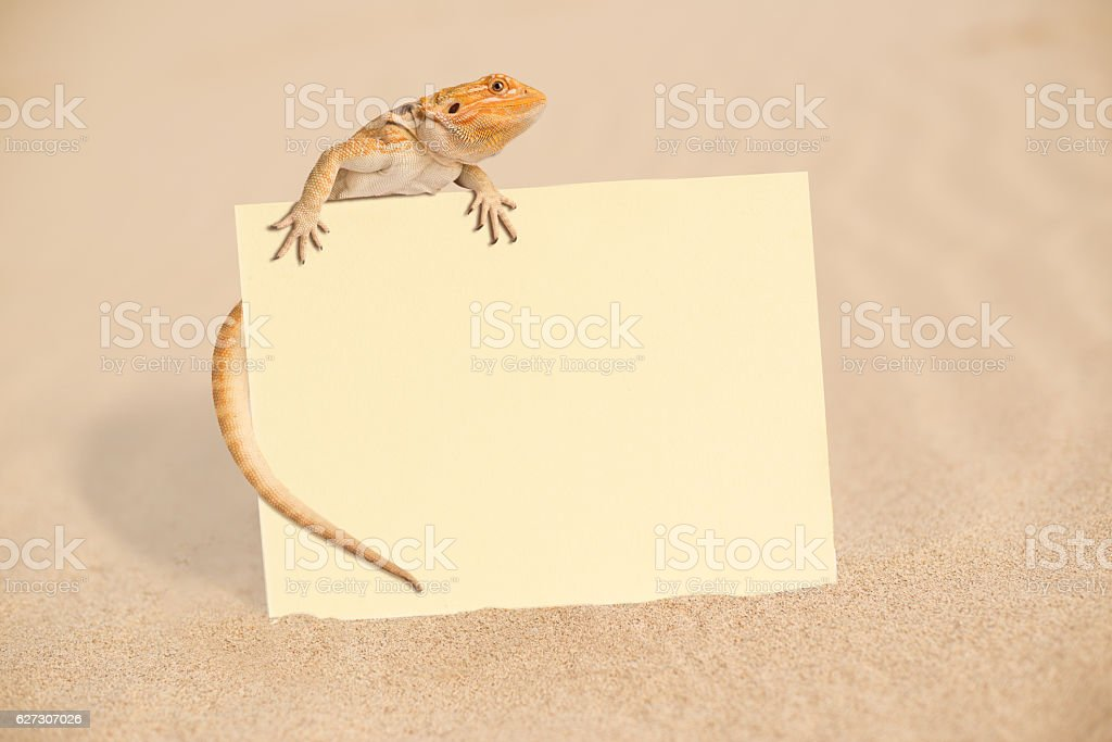 Bearded Dragon Blank Note stock photo