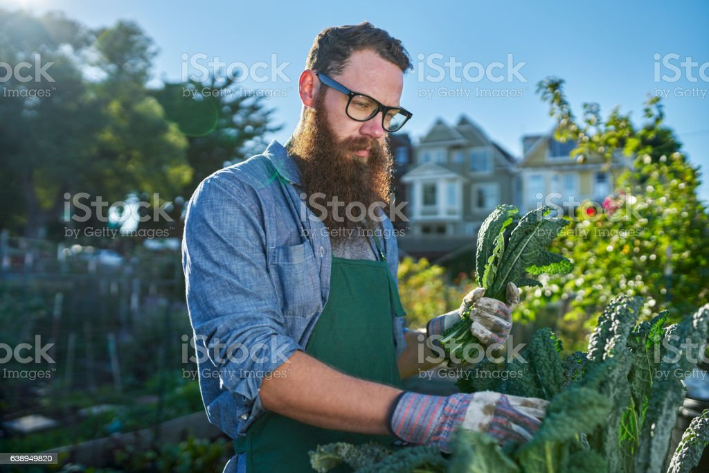 bearded man with glasses tending to urban garden stock photo