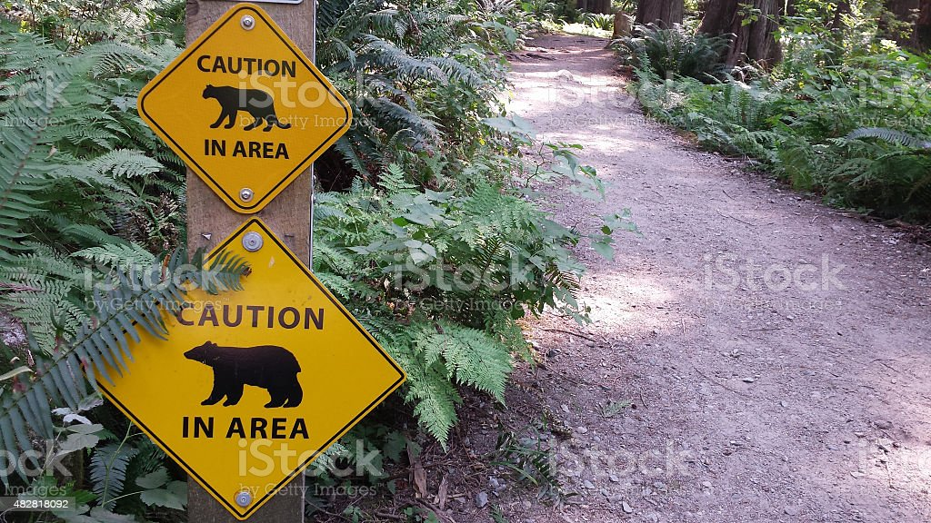 Bears and cougars on hiking trail stock photo