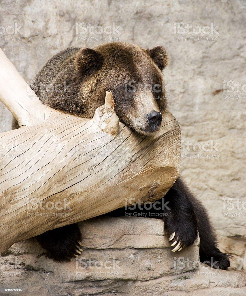 Bear's Life royalty-free stock photo