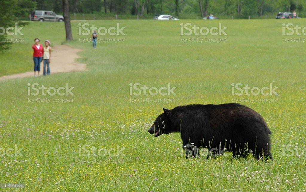 Beary close royalty-free stock photo