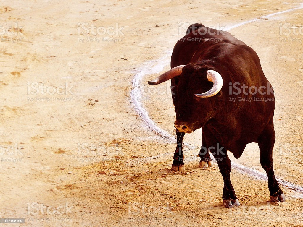 Beast in the Bullring stock photo