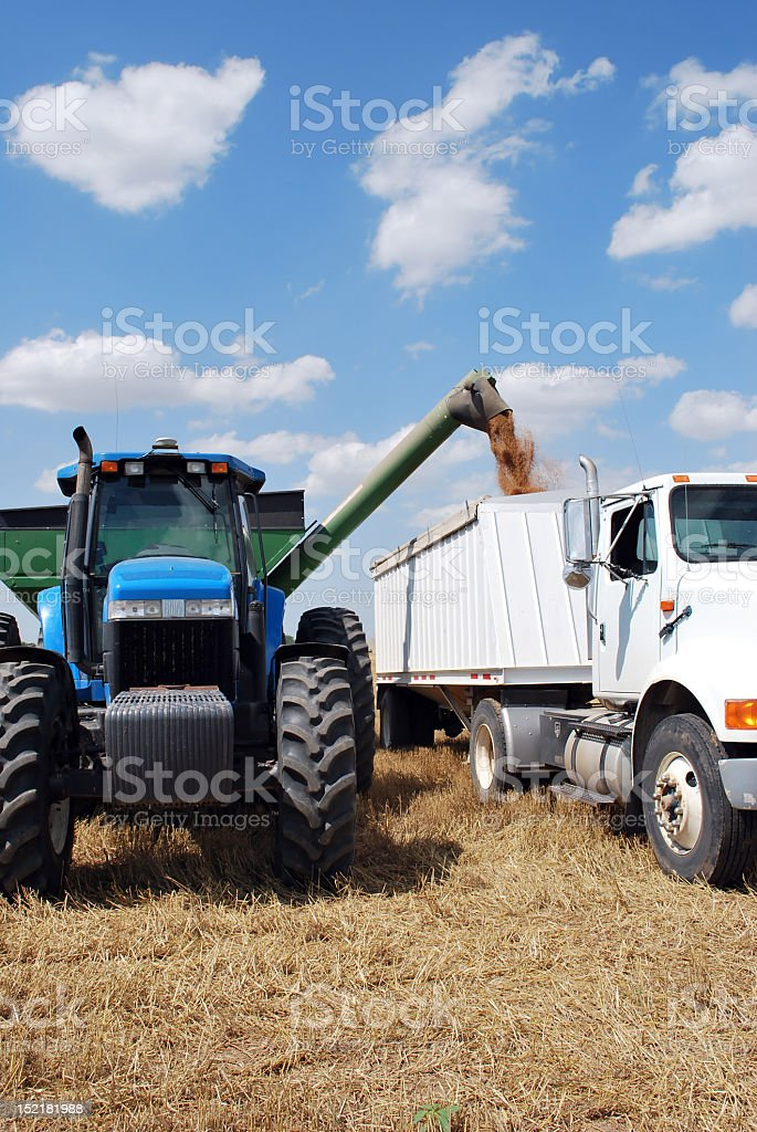 Beatiful Day to Unload Grain royalty-free stock photo