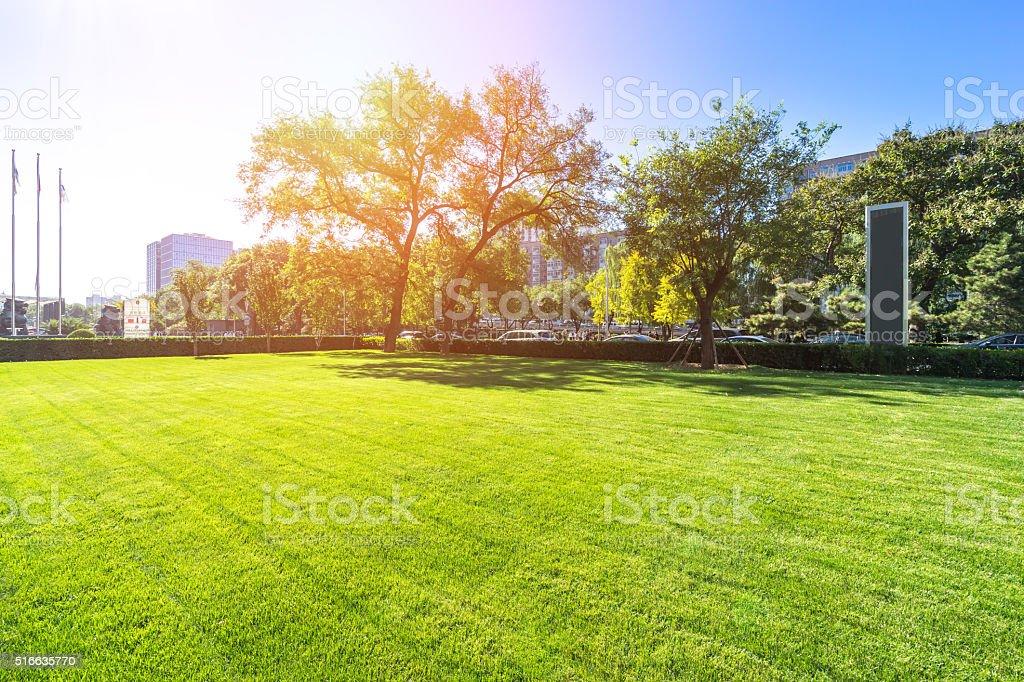 beatiful grassland in beijing in sunny day stock photo