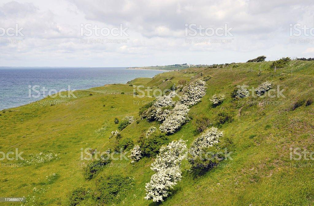 Beatiful nature from Aeroe, Denmark stock photo