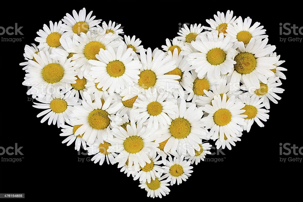 Beating real daisies heart royalty-free stock photo