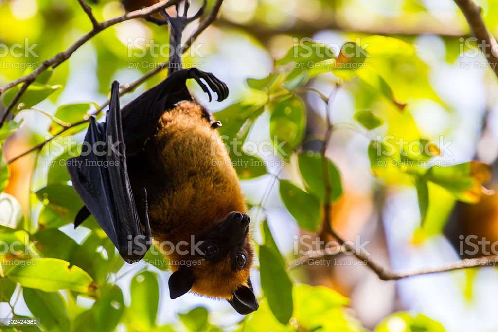 Bat. stock photo