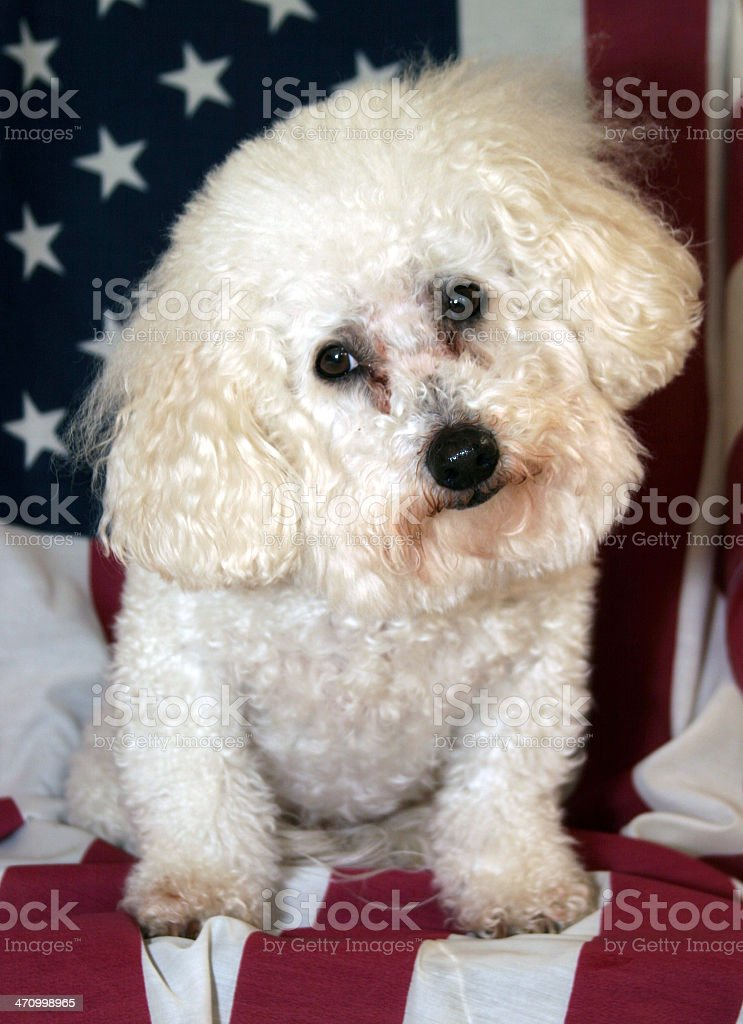 Beau for President royalty-free stock photo