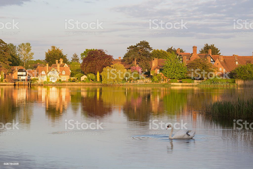 Beaulieu Pond Autumn Swan stock photo