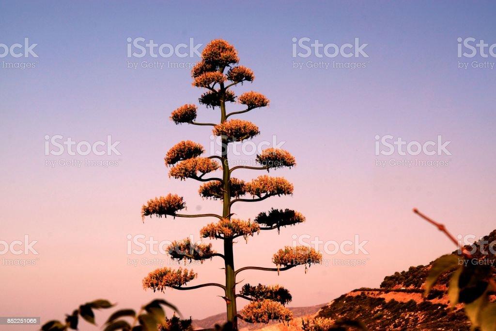 Beauté d'un arbre stock photo