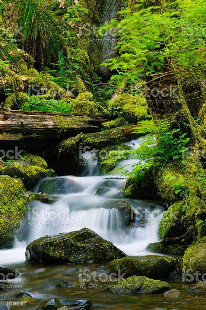 Beautifil stream stock photo