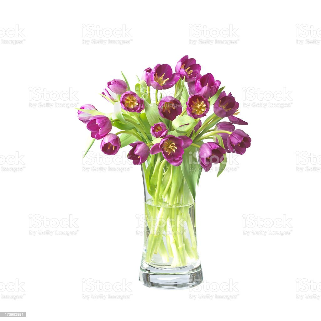 beautifil tulips  flowers in a vase isolated  with clipping path royalty-free stock photo