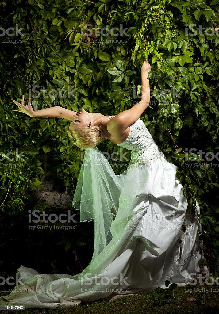 Beautifu bride royalty-free stock photo