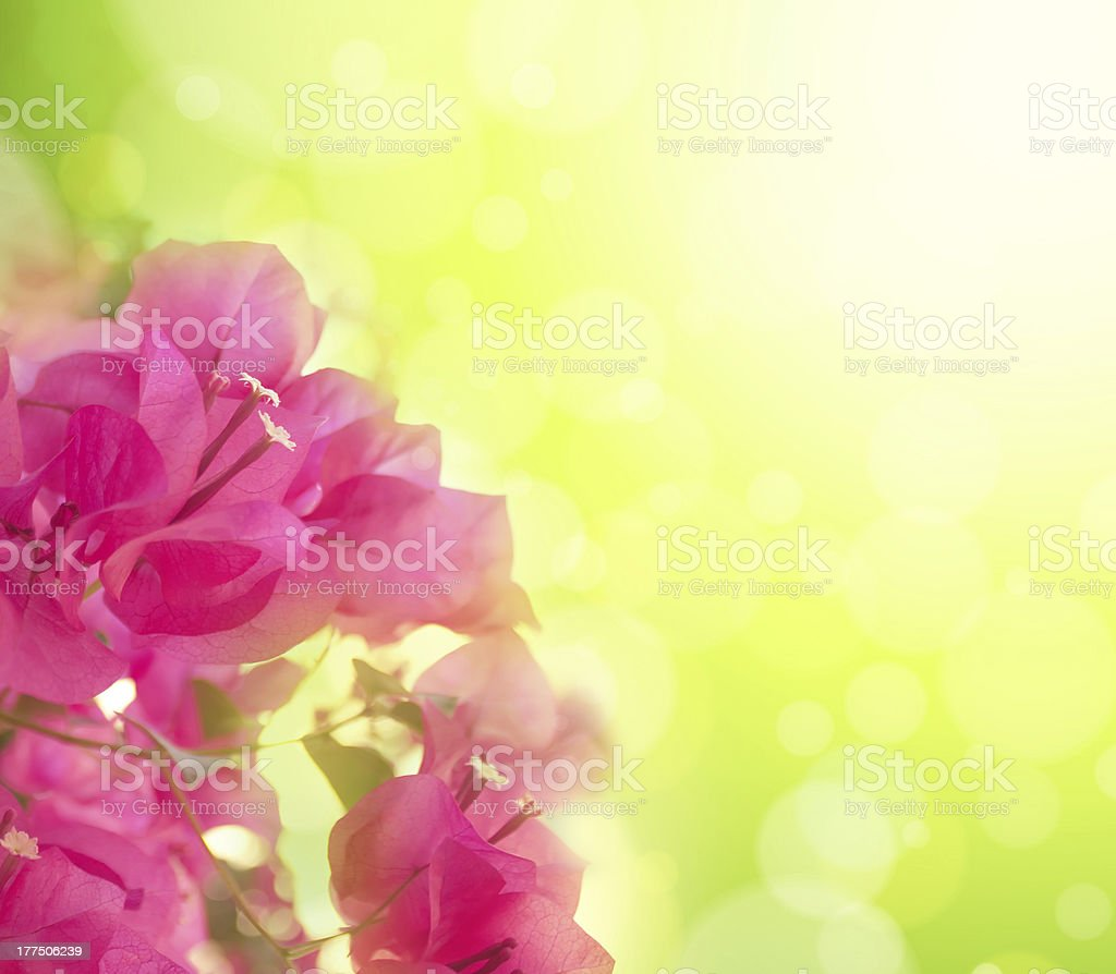 Beautiful abstract floral background with pink flowers. Border design royalty-free stock photo
