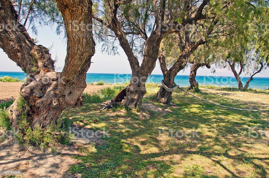 beautiful Aegean sea coast in Rhodes island, Greece stock photo