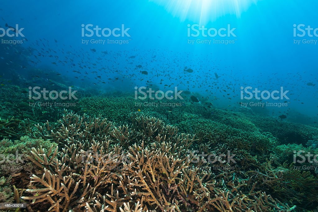 Beautiful Afternoon Scenery, Staghorn Coral Reef, Komodo National Park, Indonesia stock photo