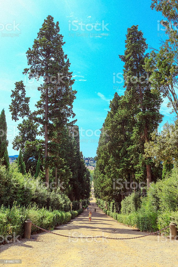 Beautiful alleyway in the park royalty-free stock photo