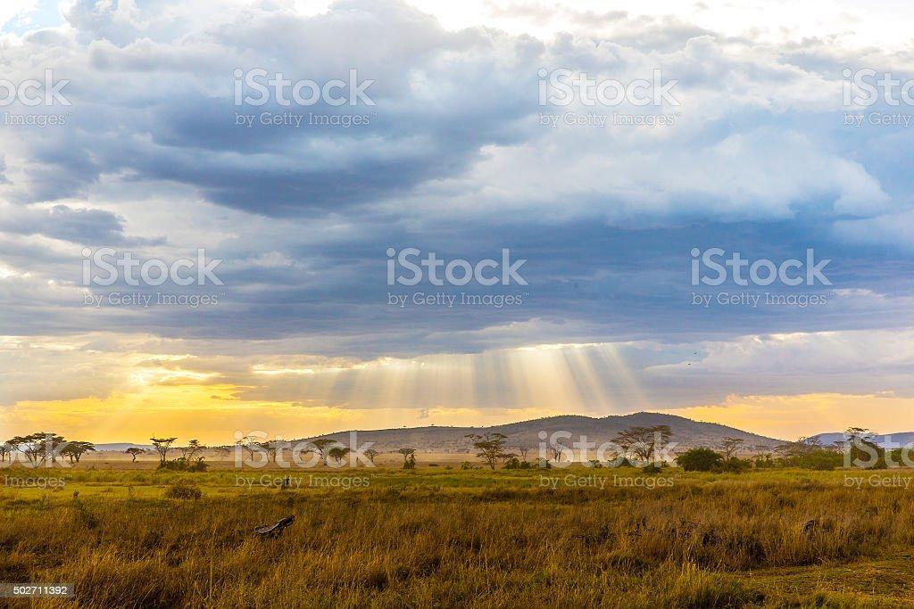 Beautiful and dramatic warm evening in Serengeti Tanzania, Africa.