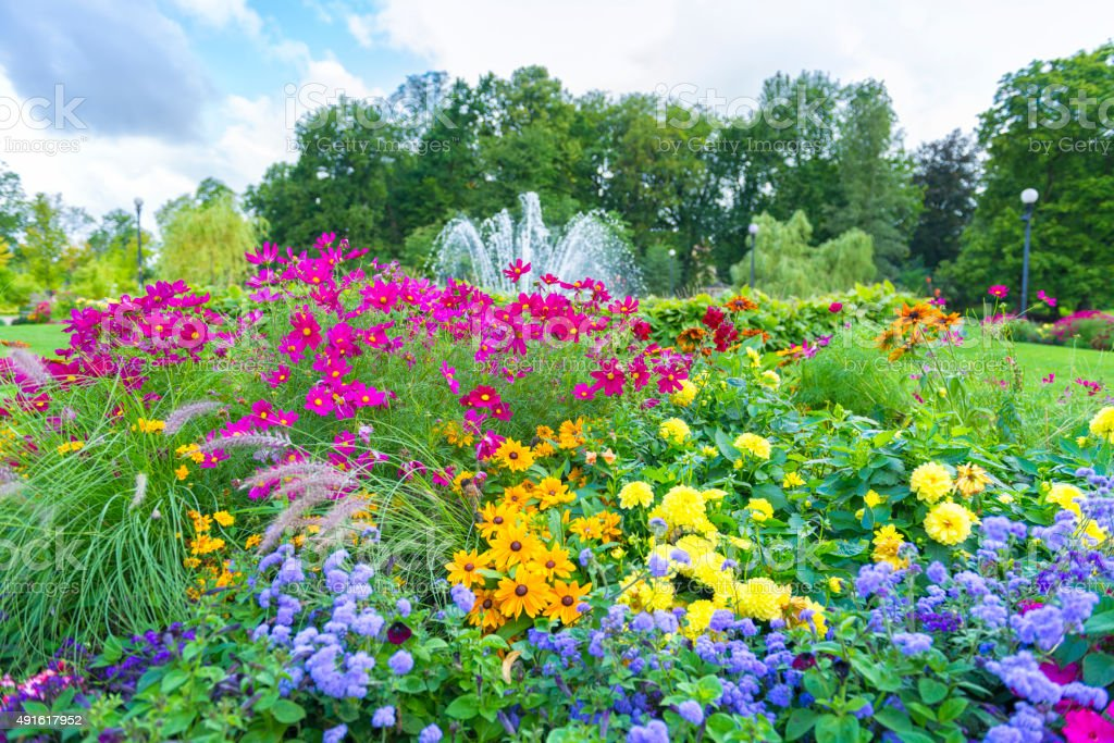 Beautiful and multicolored flowerbed in Gothenburg city garden. stock photo