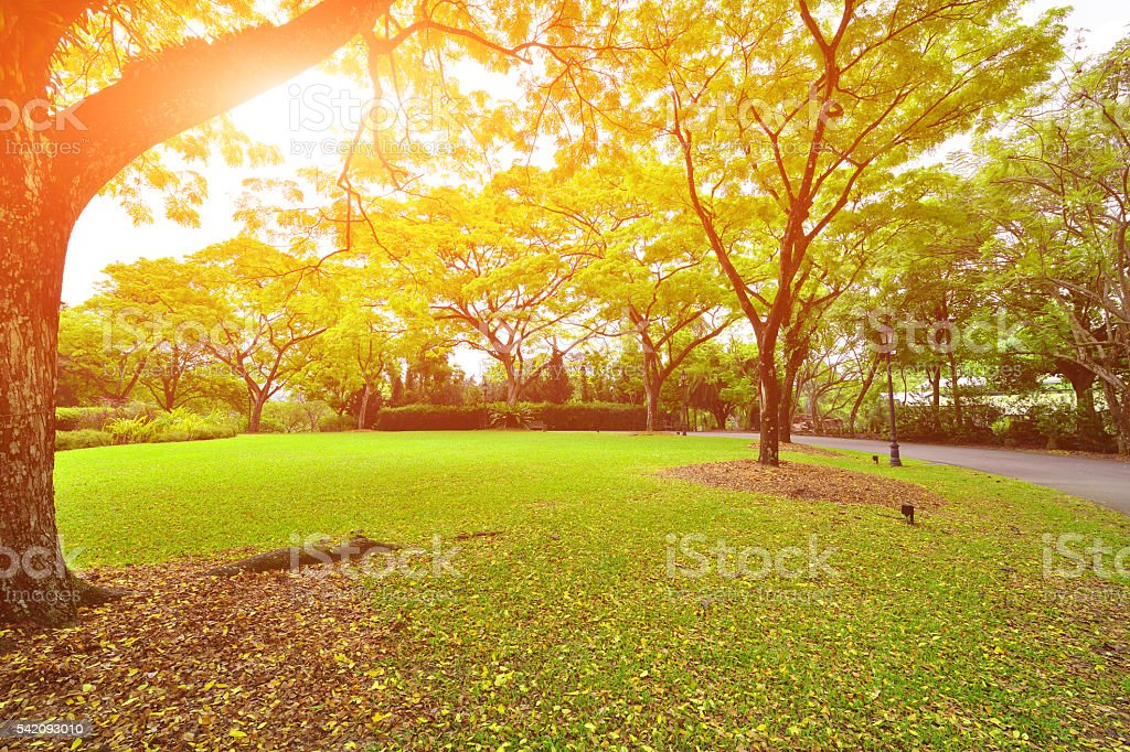 Beautiful and Tranquil Garden stock photo