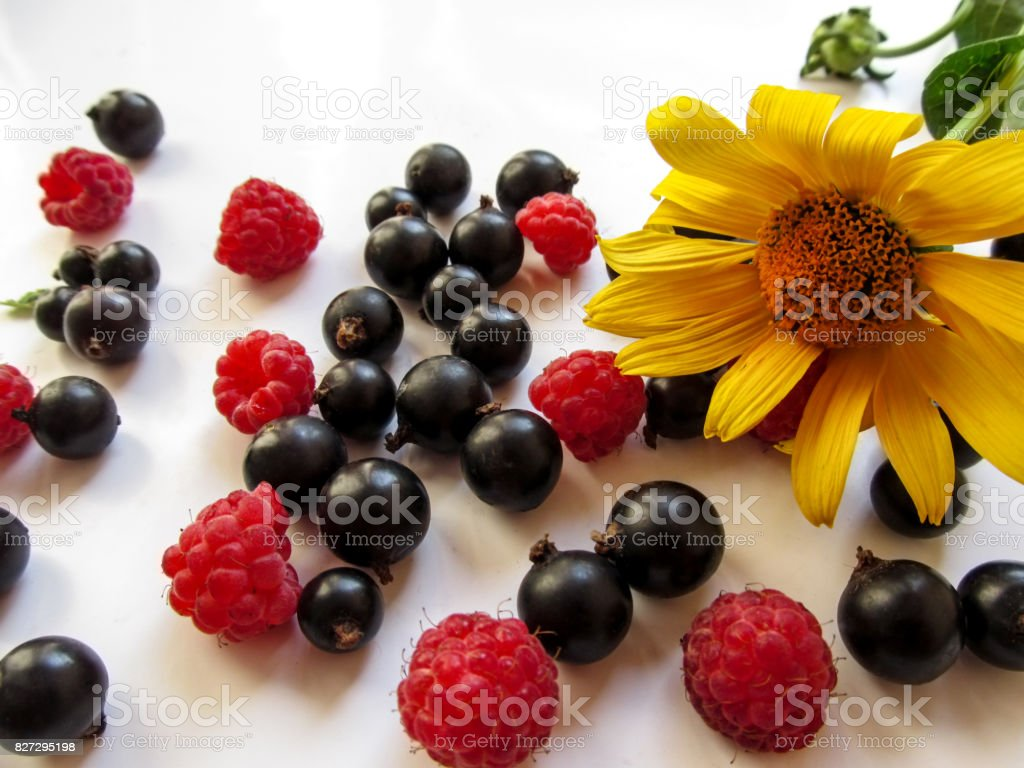 Beautiful appetizing background - a bright yellow Jerusalem artichoke flower lies among berries of the raspberries and blackcurrant scattered on a white surface stock photo