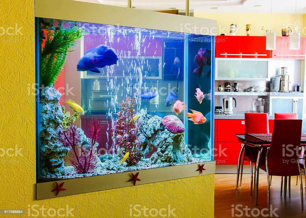 Beautiful aquarium with  fish in a room to modern apartment stock photo