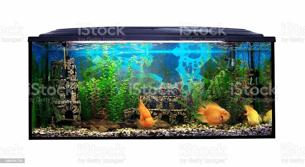 Beautiful aquarium with sea fish on a white background stock photo