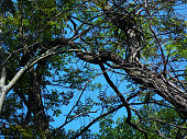 Beautiful Arching Tree Branches against a Bright Blue Sky
