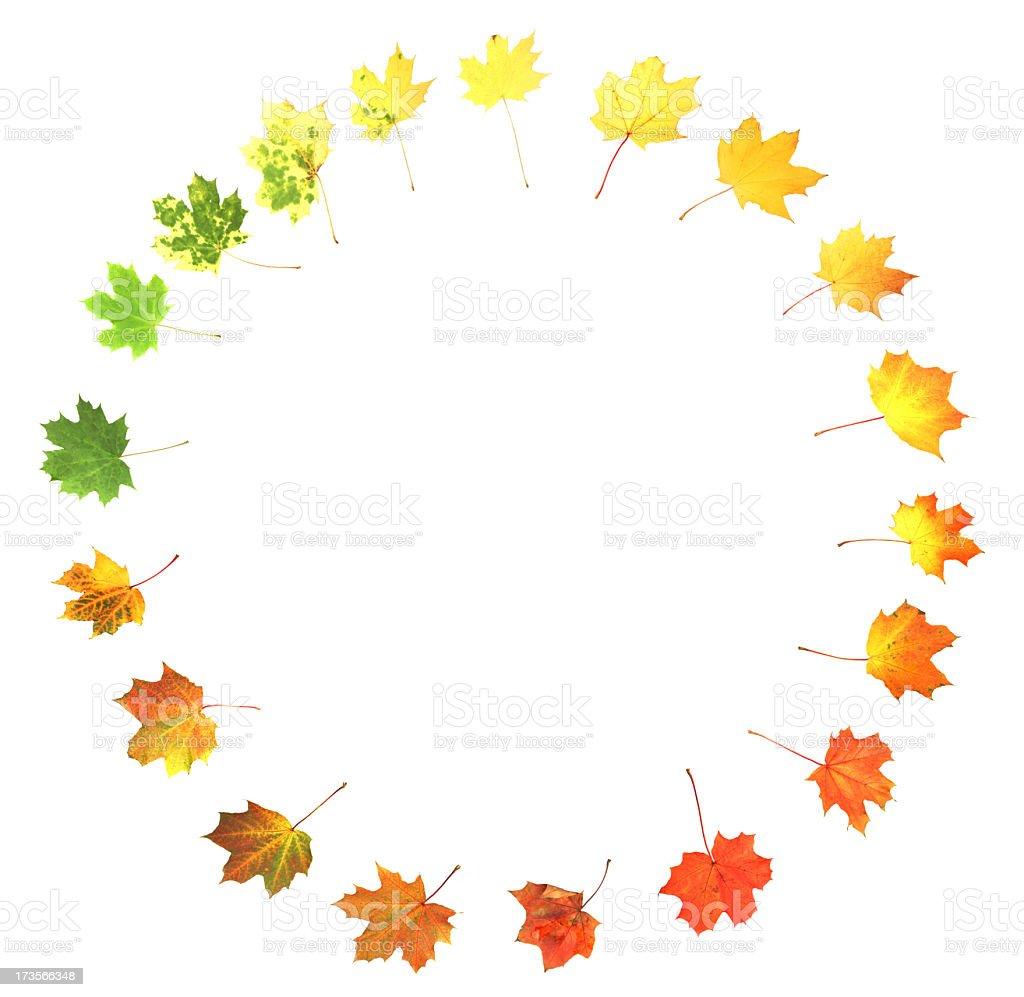 Beautiful array of bright autumn colors  stock photo