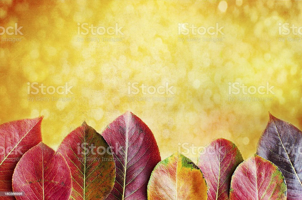 Beautiful autumn background with pear leaves royalty-free stock photo