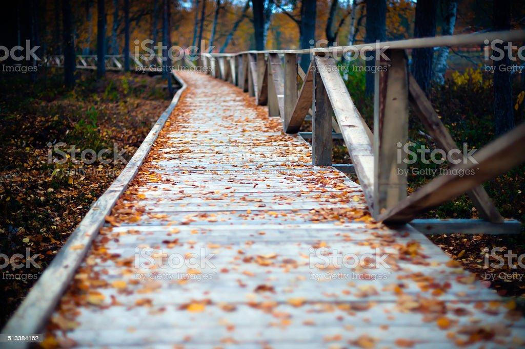 Beautiful autumn colors stock photo