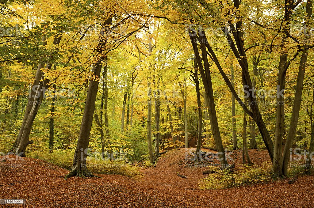 Beautiful Autumn Forest royalty-free stock photo