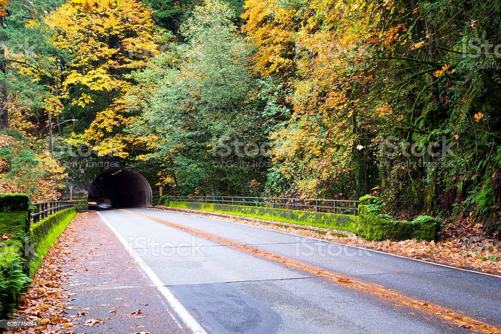 Beautiful autumn in forest with road and tunnel stock photo