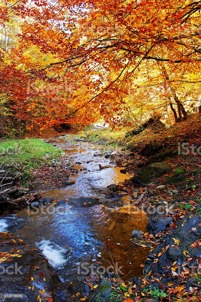 beautiful autumn in the forest stock photo