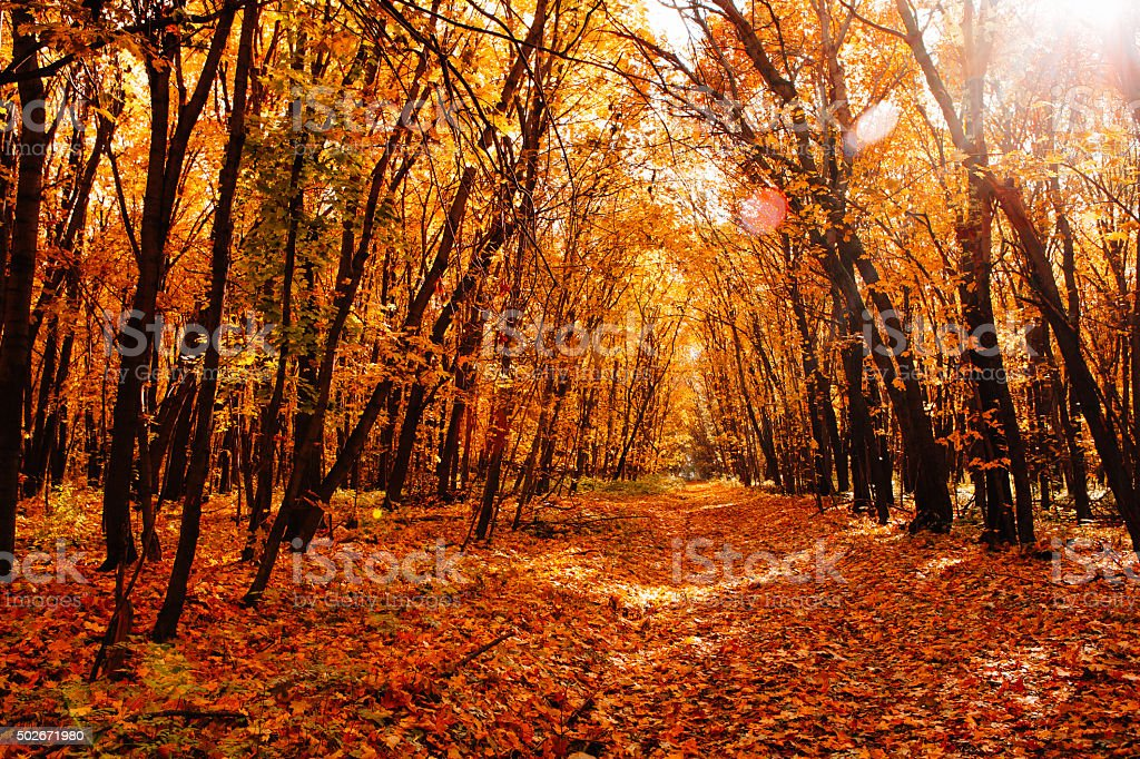 Beautiful autumn landscape on a background of yellow trees stock photo