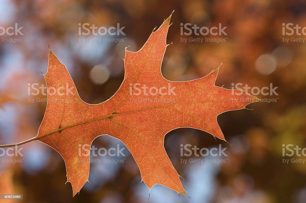 Beautiful Autumn Leave Detail stock photo
