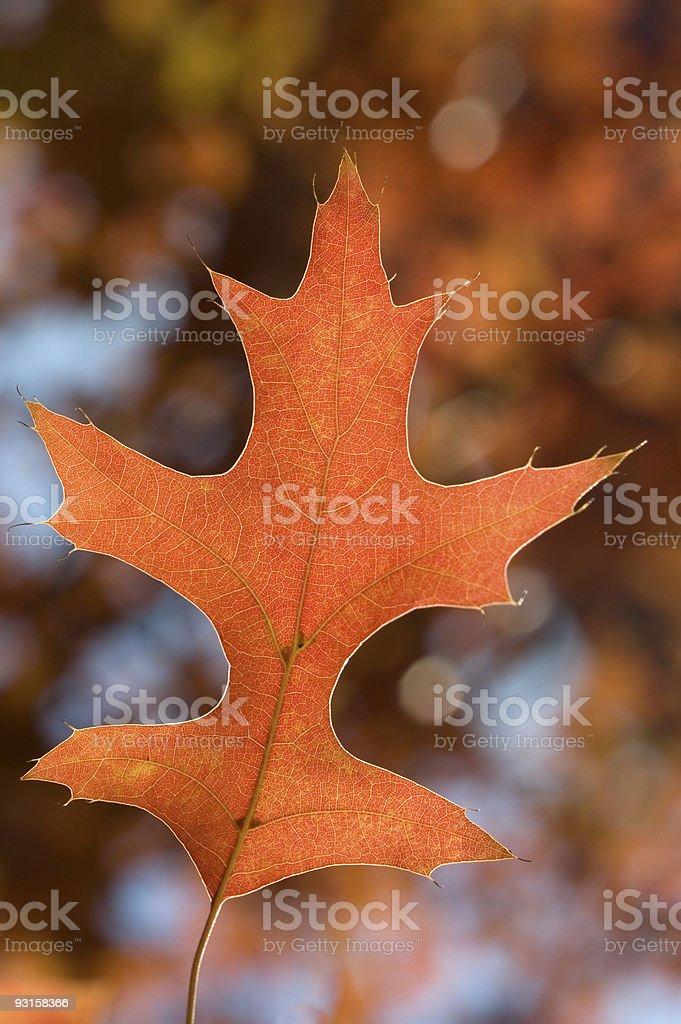 Beautiful Autumn Leave Detail (Vertical) stock photo