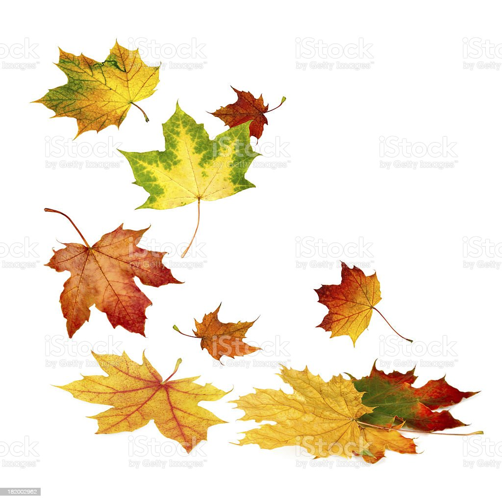 Beautiful autumn leaves falling down stock photo