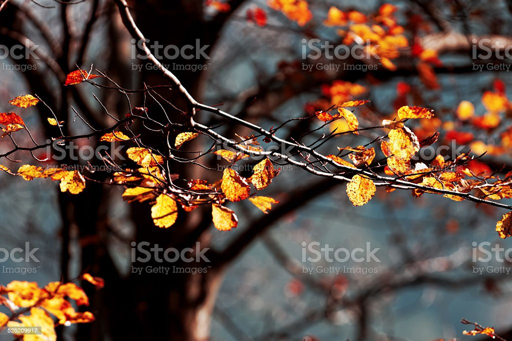 Beautiful autumn, leaves in forest 3 stock photo