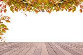 Beautiful autumn leaves isolated on white background.