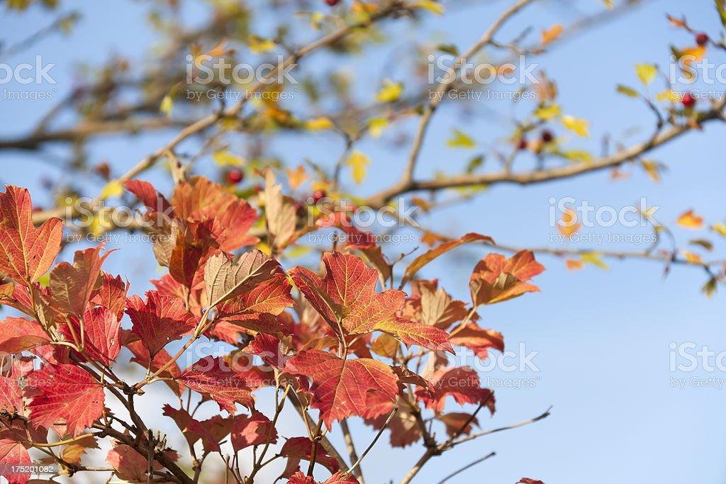 Beautiful autumn leaves stock photo