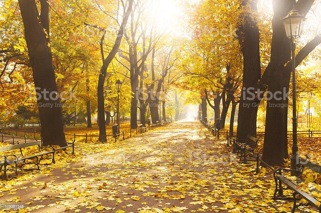 Beautiful autumn stock photo