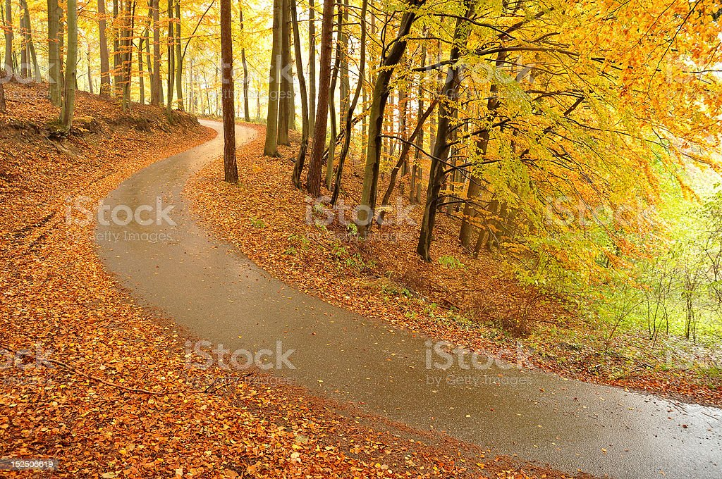Beautiful autumn trees and road royalty-free stock photo