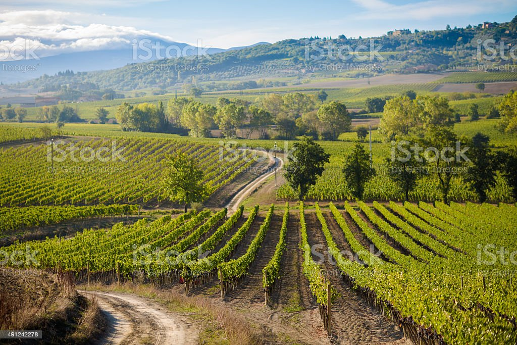 Beautiful autumn Tuscany vineyards view stock photo