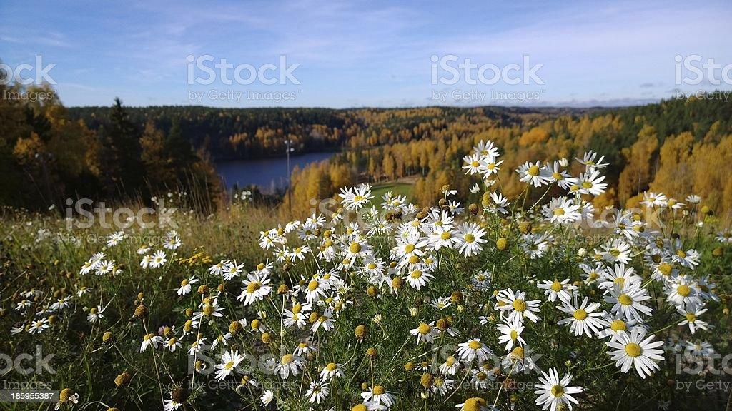 Beautiful Autumn views at Nuuksio, Espoo stock photo