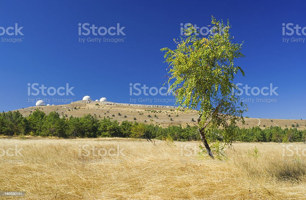 Beautiful autumnal landscape with lonely birch stock photo