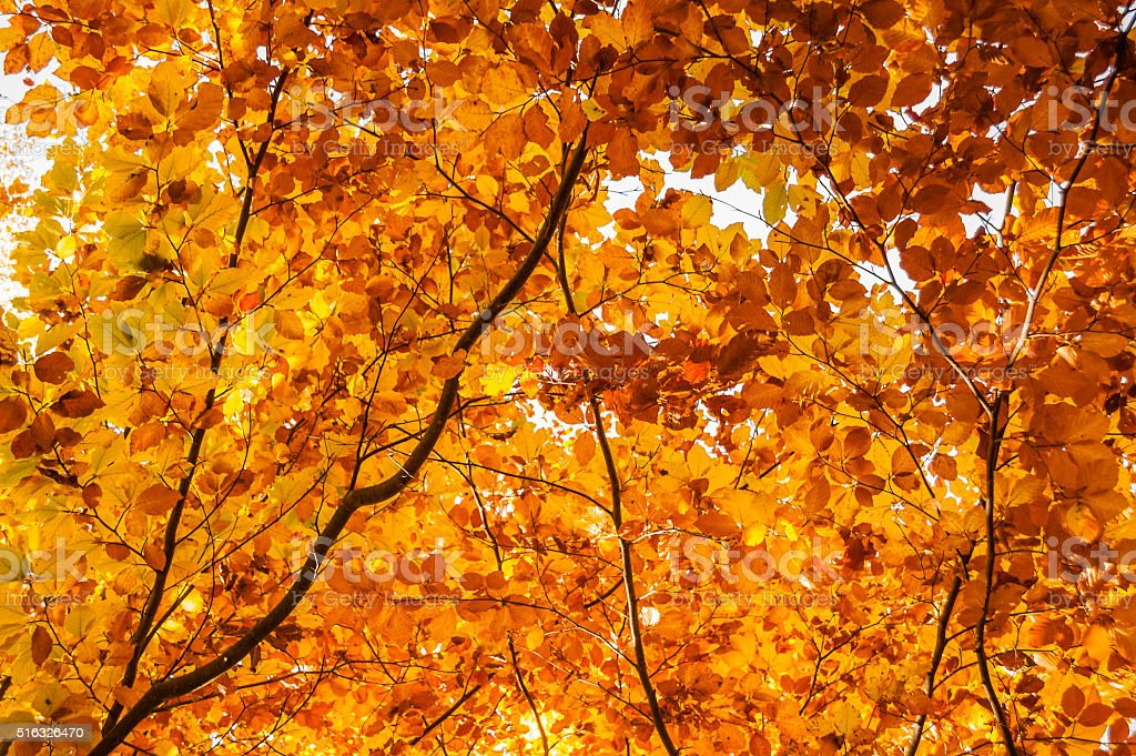 Beautiful autumnal leaves stock photo
